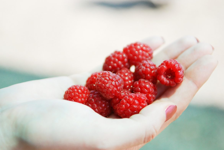 raspberry 1832152 1920
