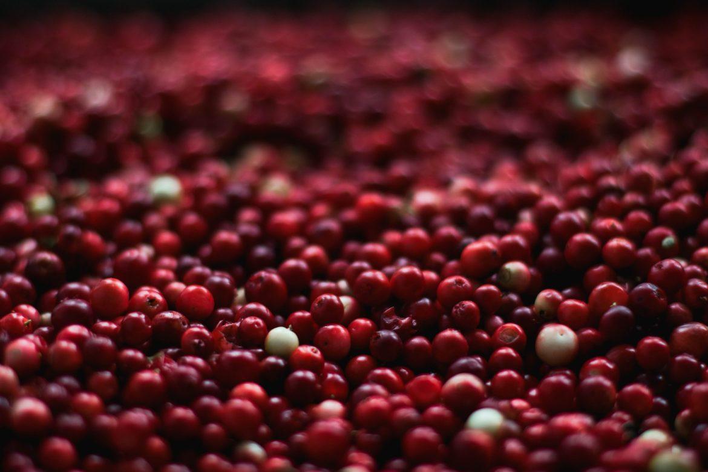 berries 1851161 1920
