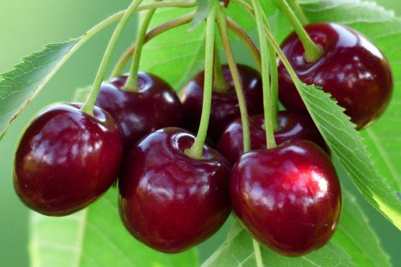 cherry 167341 1920