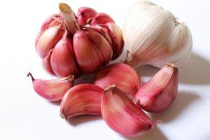 garlic 618400 1920