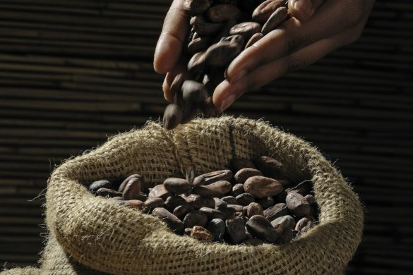 cocoa beans 499970 1920