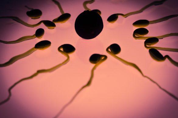 sperm 956482 1920