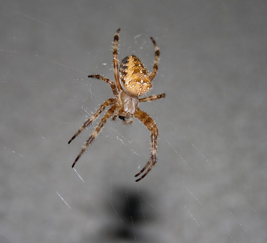 spider 2087060 1920