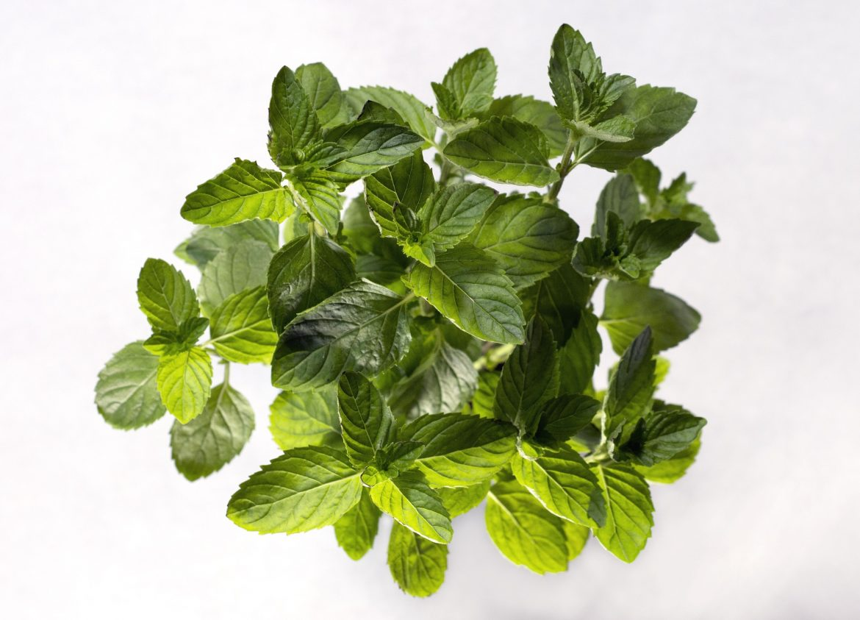plant-3690005_1920