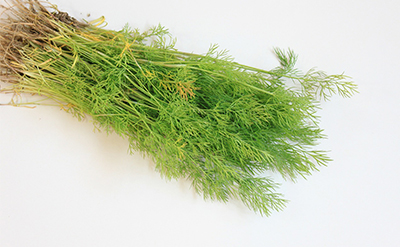 dill-essential-oil