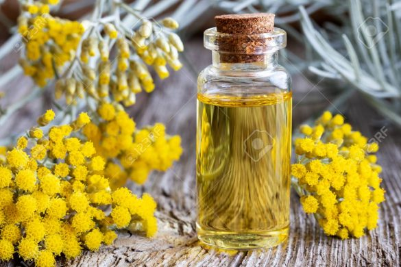 A bottle of helichrysum essential oil with fresh blooming helich